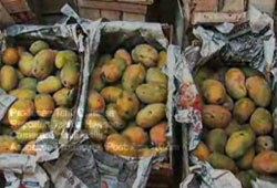 USAID Annual Mango Conference- Reaching New Export Destinations