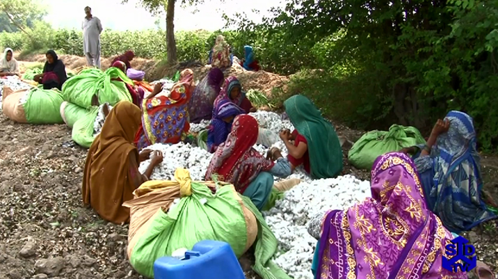 Climate change and the cotton sector in Pakistan